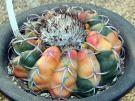 원반옥(圓盤玉)